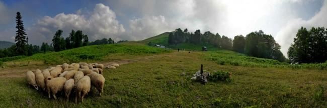 Bacaklı Plateau
